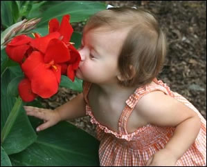 Baby smelling a flower